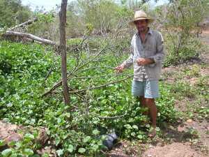 Cacimba fica coberta pela vegetação